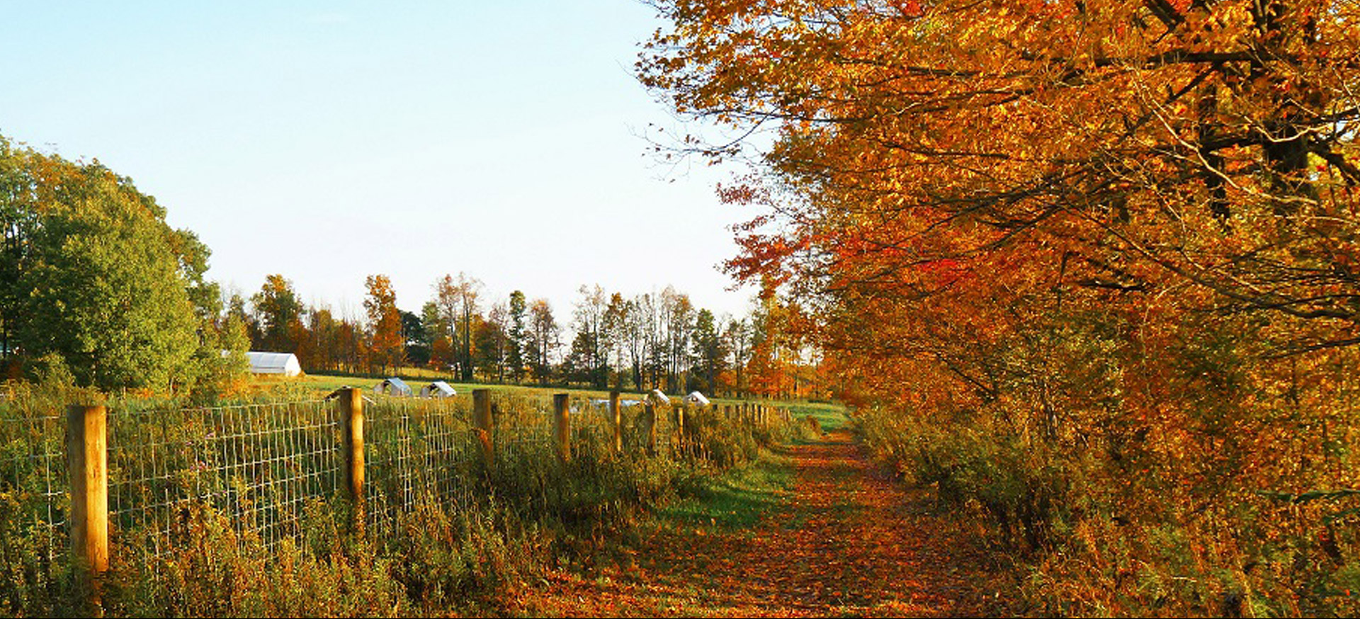 Back country road in the fall